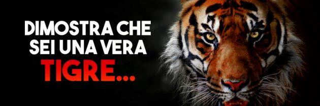 Torna la Tana delle Tigri di Lottomatica